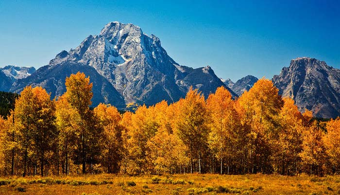 Mount Moran with a forground of Aspen Trees in Grand Teton National Park