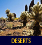 thumbnail of Cholla Cactus in Superstitions linking to Deserts Photo Gallery