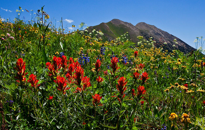 colorado map in usa with Indian Paintbrush Paradise Divide Crested Butte Co on Perideridia Kelloggii4 l further Sphaeralcea Munroana1 l as well 44d7596e 3d1f 11e1 Ac9c Db9386c91ce5 Kelly Station likewise Lomatium Parryi7 l also Mimulus Guttatus9 l.